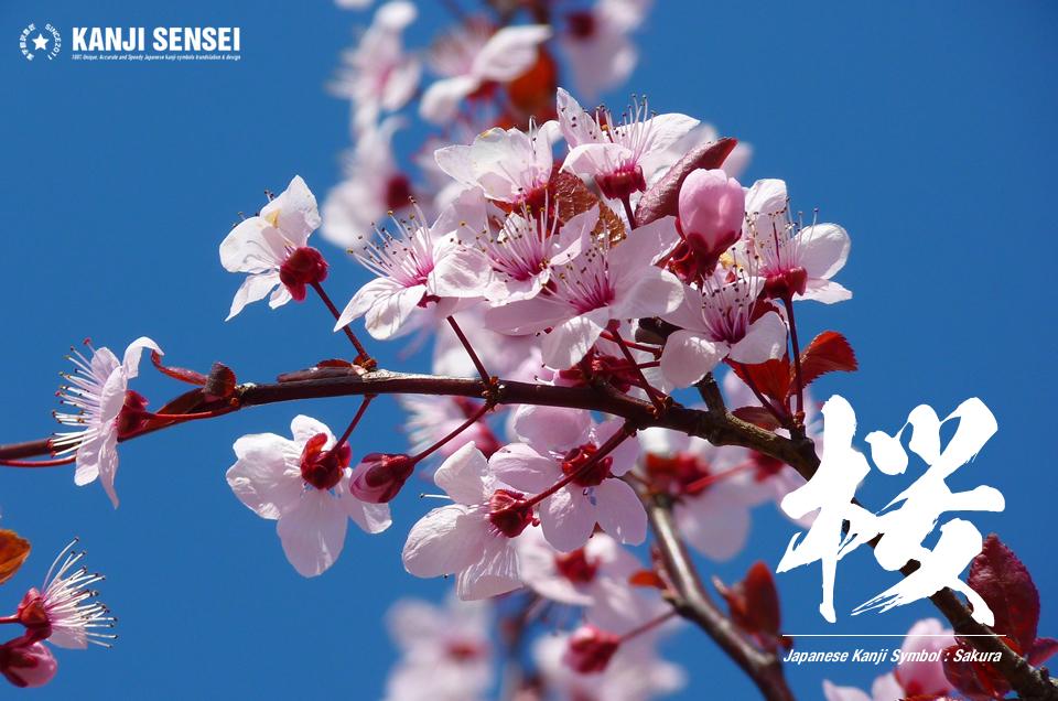 Japanese kanji Symbol: Cherry blossom